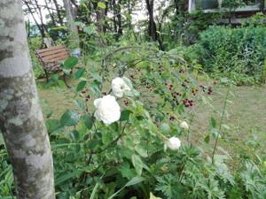 Garden321